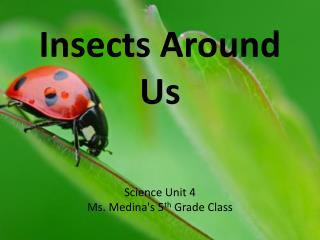 Insects Around Us Science Unit 4 Ms. Medina's 5 th  Grade Class