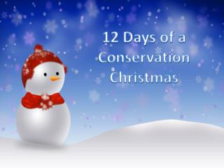 12 Days of a Conservation Christmas