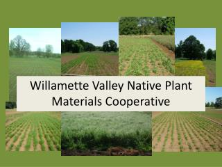 Willamette Valley Native Plant Materials Cooperative