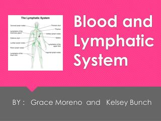 Blood and Lymphatic System