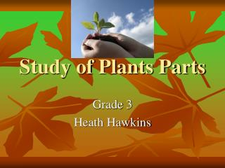 Study of Plant Parts Hawkins