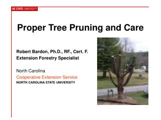 Proper Tree  Pruning Care