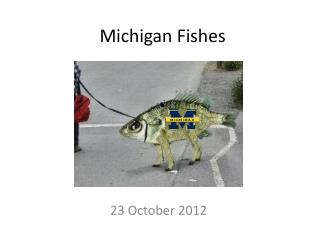 Michigan Fishes