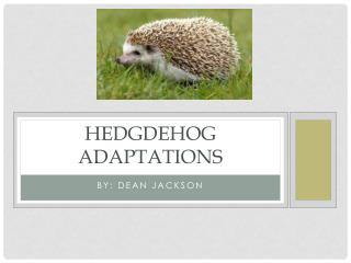 HEDGDEHOG ADAPTATIONS