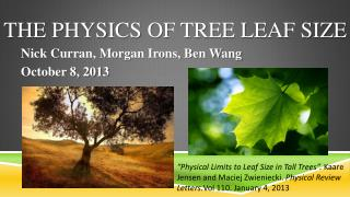 THE PHYSICS OF TREE LEAF SIZE
