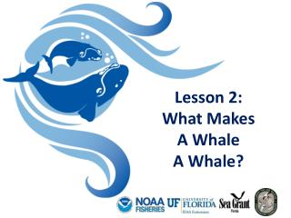 Lesson 2:  What Makes  A Whale  A Whale?