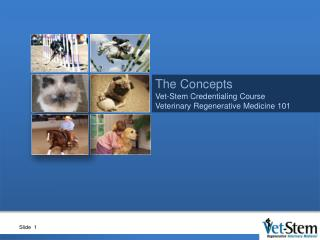 The Concepts Vet-Stem Credentialing Course Veterinary Regenerative  Medicine 101