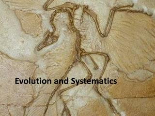 Evolution  and Systematics