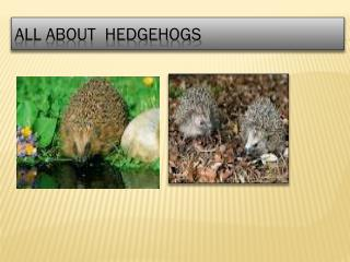 All about  hedgehogs