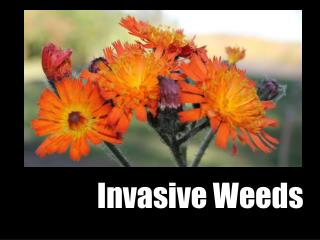 Invasive Weeds