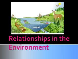 Relationships in the Environment