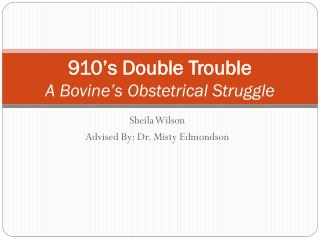 910's Double Trouble A Bovine's Obstetrical Struggle
