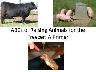 ABCs of Raising Animals for the Freezer: A Primer