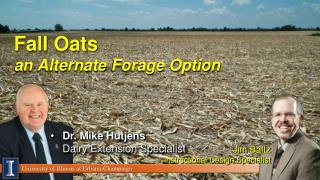 Fall Oats an Alternate  Forage Option
