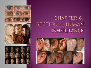 Chapter 6, Section 1: Human Inheritance