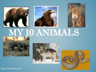 My 10 animals