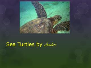 Sea Turtles by  Anders
