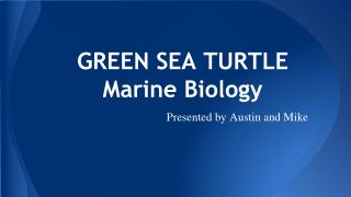 GREEN SEA TURTLE Marine Biology