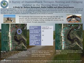 A Survey of Diamondback Terrapin Nesting and Foraging Habitat in the Herring River Estuary