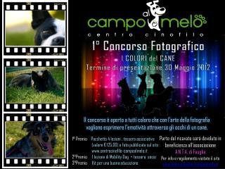 1° Concorso Fotografico l COLORI del CANE Termine di presentazione 30 Maggio 2012