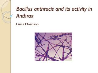 Bacillus  anthracis  and its activity in Anthrax