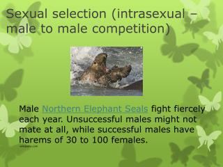 Sexual selection ( intrasexual  – male to male competition)