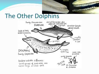 The Other Dolphins