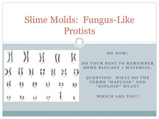 Slime Molds:  Fungus-Like Protists