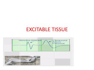 EXCITABLE TISSUE