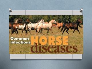 Wild vs. Domestic Equine