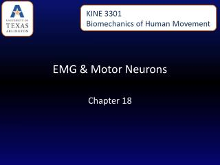 EMG & Motor Neurons