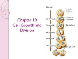 Chapter 10  Cell Growth and Division