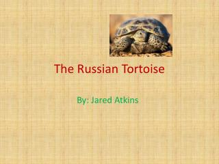 The Russian Tortoise