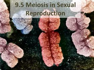 9.5 Meiosis in Sexual Reproduction