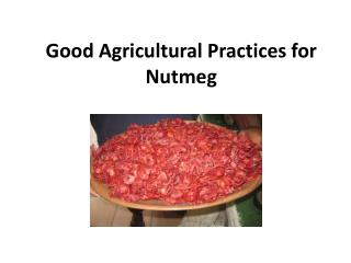 Good Agricultural Practices for Nutmeg