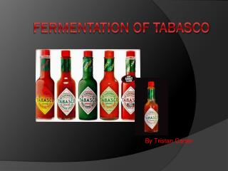 Fermentation of Tabasco