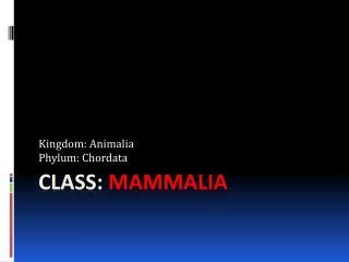 CLASS:  MAMmALIA