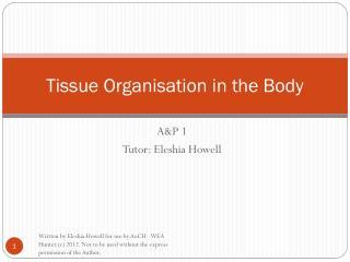 Tissue Organisation in the Body