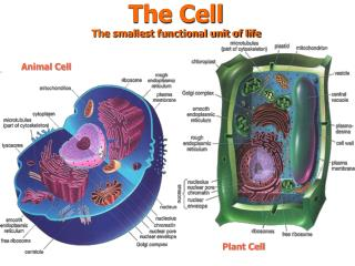 The Cell The smallest functional unit of life