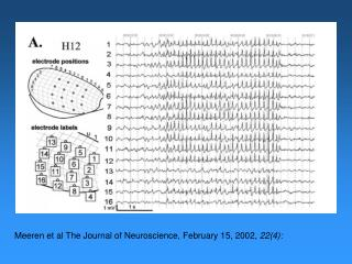 Meeren  et al The Journal of Neuroscience, February 15, 2002,  22(4):