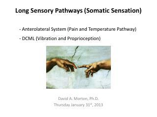 Long Sensory Pathways (Somatic Sensation)
