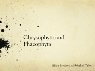 Chrysophyta and Phaeophyta