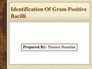 Identification Of Gram Positive Bacilli