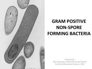 GRAM POSITIVE NON-SPORE FORMING BACTERIA