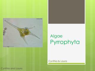 Algae  Pyrrophyta
