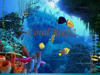Coral Reefs!