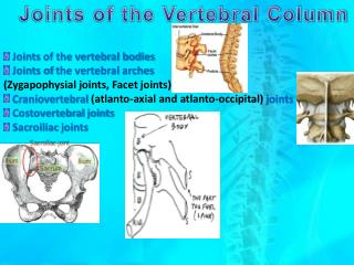 Joints  of the vertebral bodies Joints of  the vertebral  arches