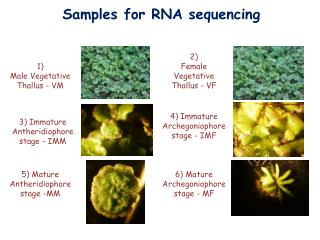 Samples for RNA sequencing