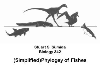 Stuart S. Sumida Biology 342 ( Simplified) Phylogey  of Fishes