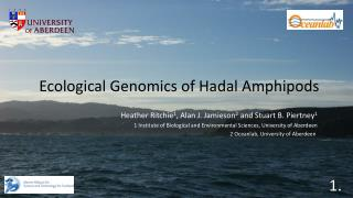 Ecological Genomics of  Hadal  Amphipods
